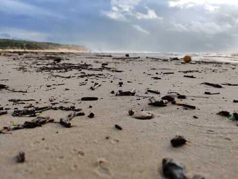 זפת בחוף פולג